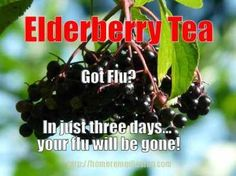 Elderberry - Medicinal Benefits and Side Effects
