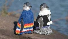 Penguins + Mini Sweaters