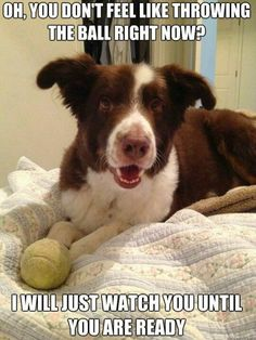 This is totally Chloe... And then she put the ball in your lap in case you didn't see her. :)