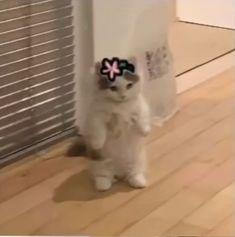 Mr Cat, Cute Cats Photos, Cat Stands, Disney Jokes, Hyouka, Anime Cat, Spongebob Memes, Small Cat, Cute Icons