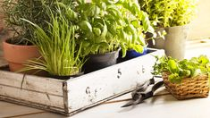 Learn how to plant an indoor herb garden with this easy step-by-step guide. Plus, get tips on what herbs to grow indoors and indoor herb garden ideas. Gardening For Beginners, Gardening Tips, Organic Gardening, Herb Garden, Vegetable Garden, Garden Bed, Growing Herbs Indoors, Pot Jardin, Mosquito Repelling Plants