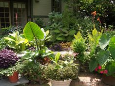 growing tropical plants in texas