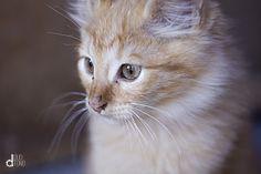 #cat #animal #pet #kitten #photo #foto #duotono