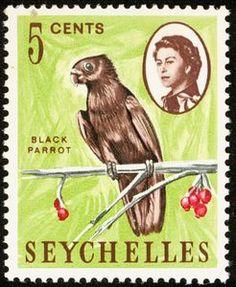 Seychelles Black Parrot (Coracopsis barklyi)