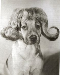 Rex was thinking that perhaps the dog groomer had gone too far.