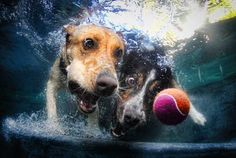 The Joy of Water... Through a Dog's Eyes