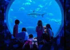 The kids will just love Atlantis, The Palm, Dubai