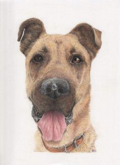 My beautiful Duke who I lost just recently, captured perfectly by my very talented daughter Mans Best Friend, Best Friends, Color Pencil Art, Colored Pencils, My Girl, Arts And Crafts, It Is Finished, Duke, Artwork