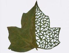 Amazing Leaf Artwork by Lorenzo Duran