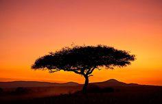 Acacia tree silhouetted at dawn, Masai Mara Game Reserve, Kenya, Africa (© Robert Harding World Imagery/Alamy)