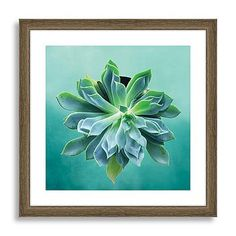 Minted for west elm - Pointed Succulent #westelm - For the kid's hallway?