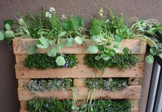 Cómo hacer un jardín vertical en un palet, paso a paso