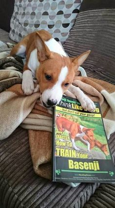 Reasons For Using A Dog Stroller Basenji Puppy, Dog Stroller, Emergency Vet, Training Your Dog, Brain Training, Yorkshire Terrier Puppies, Rat Terriers, Toy Puppies, Losing A Dog