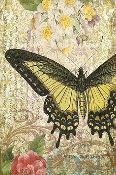 Butterfly Kisses-C Digital Art / Jean Plout