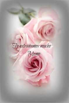 Missing My Brother, Rose, Flowers, Plants, Miss You, Pink, Plant, Roses, Royal Icing Flowers