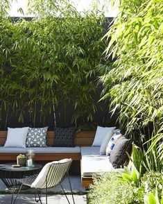 in this beautiful post completed with dozens of nice images you would difficult to match, this is 10 small courtyard garden ideas you could copy for your small garden or backyard space Small Courtyard Gardens, Small Courtyards, Outdoor Gardens, Small Back Gardens, Backyard Patio, Backyard Landscaping, Modern Landscaping, Growing Bamboo, Bamboo Screening