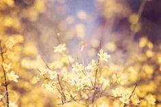 Spring Sunshine Photography Print Vintage by JenniferRPhotography, $12.00