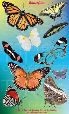 Butterflies  Vector Clip Art by CleverVectors on Etsy, $3.95