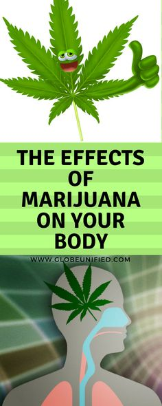 The Effects of Marijuana on Your Body