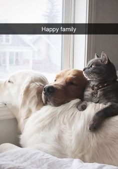 Cats 🐱 - Cat, cat memes, cats funny, cats and kittens and cats cute. Animals And Pets, Baby Animals, Funny Animals, Cute Animals, Cute Cats, Funny Cats, Image Chat, Photo Chat, Tier Fotos