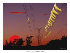 Botany can be eccentric. In Australias Wollemi National Park it made Bananas grow from electrical wires while the sun stopped in wonder. Converson of inches into centimetres: 8 x 10 = 30.5cm x 20.3cm printed on Fuji Crystal Archival paper 16.5 x 12 = 42cm x 30cm printed on 200gsm paper with silk finish 23.5 x 16.5 = 60cm x 40cm ditto 33 x 23 = 84cm x 58.8cm printed on Canson 310gsm photo rag paper 46.5 x 32.5 = 118cm x 82.6cm ditto Printers are Harvey Norman/Snap/Cie-Elle in Sydney.  Buyers…