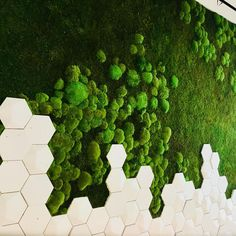 Sneak preview of The Art of Preserved Nature® installed at the new PwC office in New York City  We love being a part of your day  #gardenonthewall  #greenwall  #wallgardens #verticalgardens #livingwall #mosswall #restaurantdesign #workplacedesign #workplace #officedesign #greendesign #greenoffice #biophilia #biophilicdesign #preservedwallgardens #preservedwallgarden #preservedgreenwall #preservedgreenwalls #hospitalitydesign #retaildesign #healthcaredesign #interiordesign #lobbydesign #in... Workplace Design, Healthcare Design, Retail Interior Design, Stair Walls, Moss Art, Design Movements, Lobby Design, Wall Installation, Green Landscape