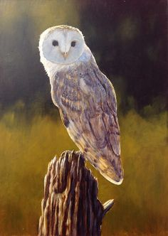 Look at this amazing owl in #oils by Ben Waddams. Quite simply stunning! I think it could be one of the best paintings we've ever had on ArtTutor. Animal Paintings, Animal Drawings, Art Drawings, Bird Paintings, Drawing Animals, Owl Art, Bird Art, Oil Painting Lessons, Great Works Of Art