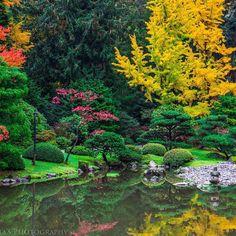 Welcome to my ZEN Garden. Fall colours at Seattle Japanese Garden.  #Seattle #WashintonState #LiveWashington #washingtonexplored #Seattle.city #gretas_photography #canon60d