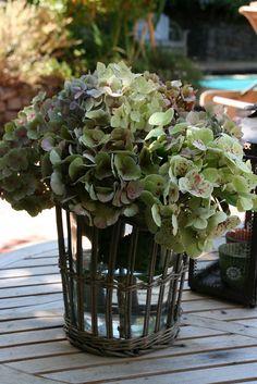Tuscan Style Hydrangea Bouquet