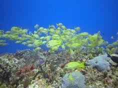 Buena Ventura Diving: Yucab Reef