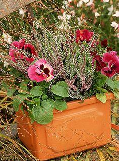 Réaliser une jardinière d'automne : 3 propositions - Duo de pensées et bruyères