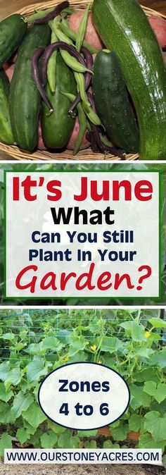This June Planting Guide is meant for those of you living in Zones 4 to 6. What can you still get planted in June? This post will give you the awnser!