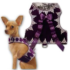 A luxurious purple velvet harness with Swarovski Crystals and a large cascading satin bow for #smalldogs #chihuahuas #yorkies #toybreeds