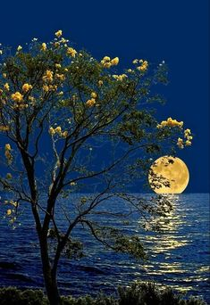 Beautiful Scenery Pictures, Nature Pictures, Travel Pictures, Cute Good Night, Good Night Moon, Jackson Pollock, Rembrandt, Beautiful World, Beautiful Places