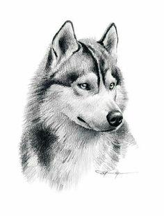 Husky draw