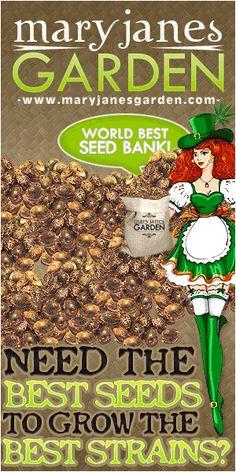 Growing Weed, Growing Herbs, Seed Bank, Marijuana Plants, Honey Recipes, Medicinal Herbs, Ganja, Medicinal Plants