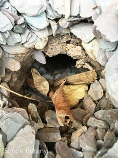 A sure sign of rats burrowing up from a drain fault. Rat Control, Best Pest Control, Pest Control Services, Types Of Bugs, Types Of Insects, Getting Rid Of Rats, Pest Management, Neem Oil, Garden Guide