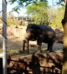 Visit with the Elephants at #Busch Gardens Tampa Bay