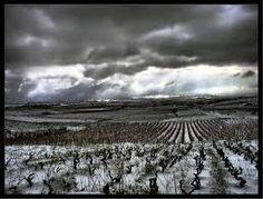 Llegan las nieves a La Rioja! #rioja #viñas #wine #murilloviteri