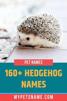 Those days where the deifinition of 'household pets' was limited to dogs, cats and bunny rabbits are long gone. So if you've brought home a small, exotic pet, check out our list of Hedgehog names to get your mind racing with more ideas. Hedgehog Names, Pygmy Hedgehog, Cute Hedgehog, Norse Names, Getting A Kitten, Horse Shelter, Cute Nicknames, Super Cute Puppies, Baby Kittens