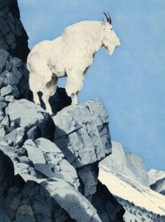 ~ Douglas Allen - Mountain Goat