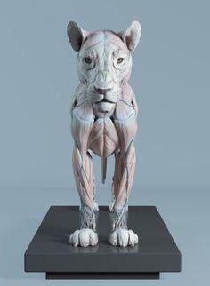 Lion anatomy Lion Anatomy, Animal Anatomy, Anatomy Study, Anatomy Art, Chat 3d, Creature 3d, Human Anatomy For Artists, Cat Whisperer, F2 Savannah Cat