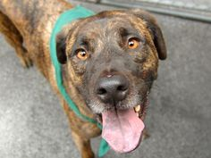 TO BE DESTROYED - 05/14/14 Manhattan Center   BARRY - A0998235   MALE, BROWN, GERM SHEPHERD, 2 yrs, 1 mo SEIZED - ONHOLDHERE, HOLD FOR EVICTION Reason OWN EVICT  Intake condition NURSING Intake Date 04/30/2014, From NY 10456, DueOut Date 05/08/2014, I came in with Group/Litter #K14-175652. Medical Behavior Evaluation GREEN https://www.facebook.com/photo.php?fbid=797424343603780&set=a.617938651552351.1073741868.152876678058553&type=3&theater