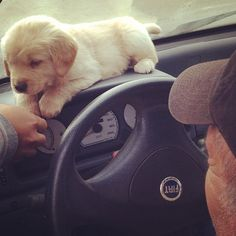 Puppy GPS. Barks once for left and twice for right! Licks you when it gets to the destination. Fiat Announces Puppy GPS When Ford announced its...