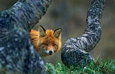 Haarberg Nature Photography - awards