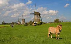 Los Molinos de Stompwijk #Holanda
