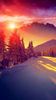 Sun shining through winter pine trees iphone 8 - Pine tree wallpaper iphone ...