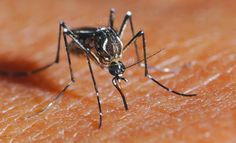 #Health Info: Recognize the #Symptoms and #FirstAid of #Dengue #Fever -- http://ht.ly/DlHvj