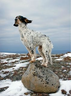 ..lonely cold and stoic, the norwegian dog stands against the wind on the dog stone of his ancestors ...