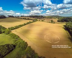Crop Circle at Ockley Hill, nr Merstham, Surrey. Reported 19th July  2015